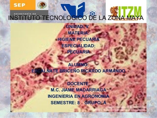 INSTITUTO TECNOLOGICO DE LA ZONA MAYA  UNIDAD: V  MATERIA:  HIGIENE PECUARIA  ESPECIALIDAD:  PECUARIA  ALUMNO:  ESCALNATE ...