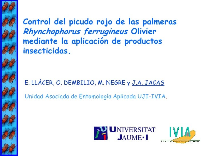Control del picudo rojo de las palmeras Rhynchophorus ferrugineus Olivier mediante la aplicación de productos insecticidas...