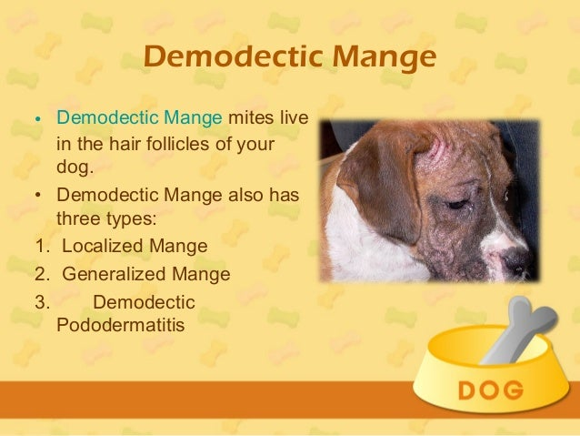 Pictures Of Dogs With Demodectic Mange