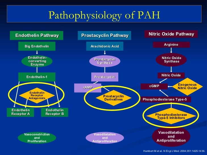 Image Result For Inters Ial Lung Disease Pulmonary Hypertension