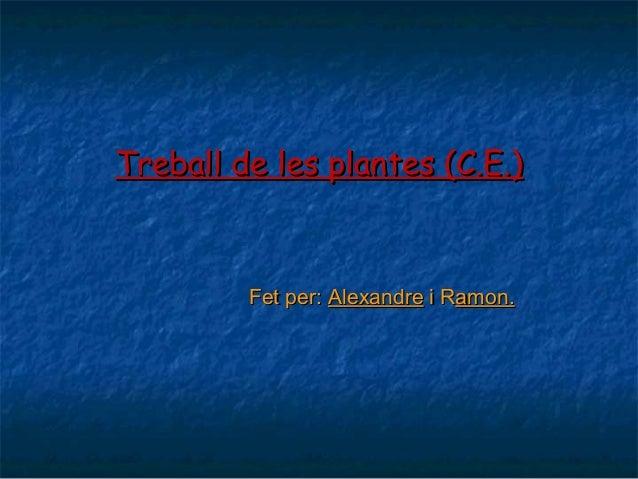 Treball de les plantes (C.E.)Treball de les plantes (C.E.) Fet per:Fet per: AlexandreAlexandre i Ri Ramon.amon.