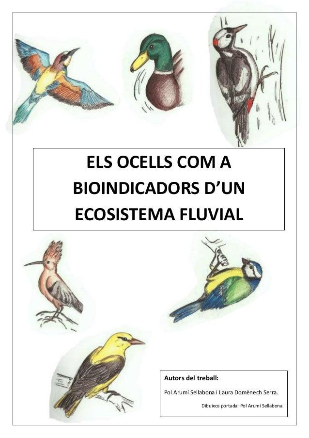ELS OCELLS COM A BIOINDICADORS D'UN ECOSISTEMA FLUVIAL  Autors del treball: Pol Arumí Sellabona i Laura Domènech Serra. Di...