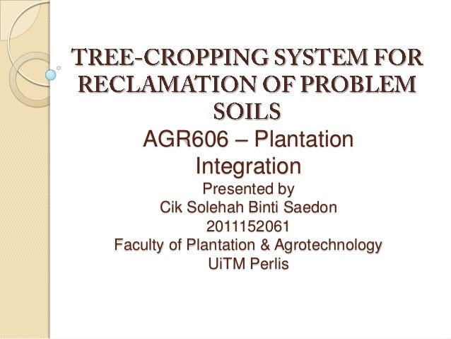 Tree cropping system for reclamation of problem soil