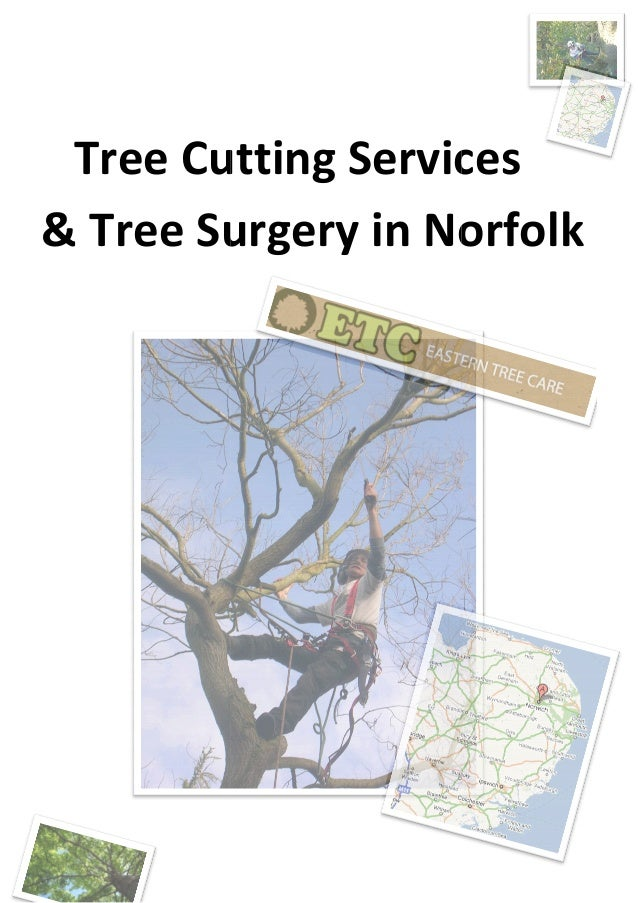 Tree Cutting Services & Tree Surgery in Cutting Services Surgery in Norfolk Cutting Services Norfolk