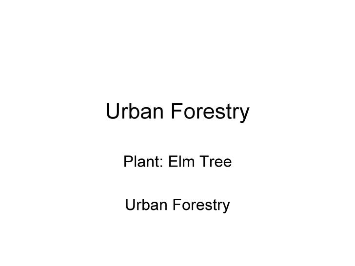 Urban Forestry Plant: Elm Tree Urban Forestry