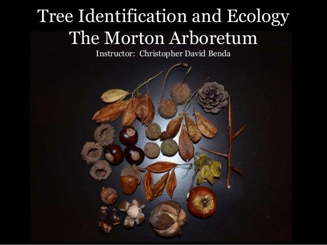 Tree Identification and Ecology The Morton Arboretum Instructor: Christopher David Benda