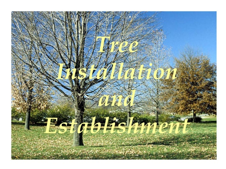 Tree Installation     andEstablishment