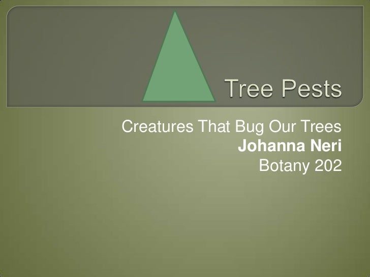 Creatures That Bug Our Trees               Johanna Neri                 Botany 202