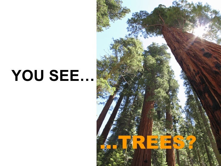 … TREES? YOU SEE…