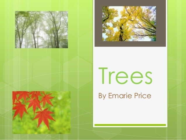 TreesBy Emarie Price