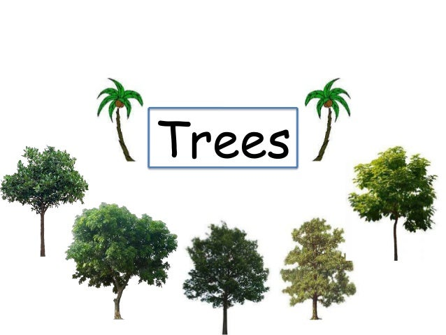 essay about trees our best friends