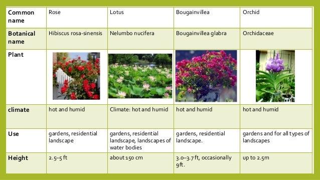 Landscape Plants Landscape Plants Names India,How To Save A Dying Calathea Plant