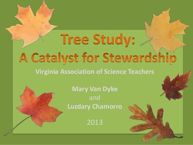 Tree Study A Catalyst for Stewardship