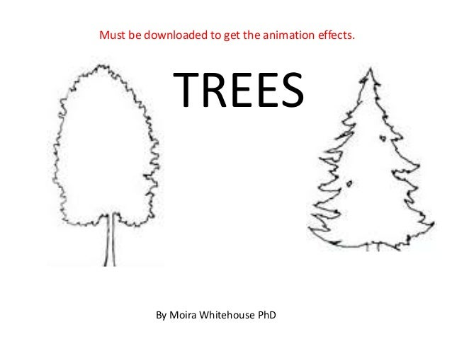 Trees, deciduous and coniferous (teach)