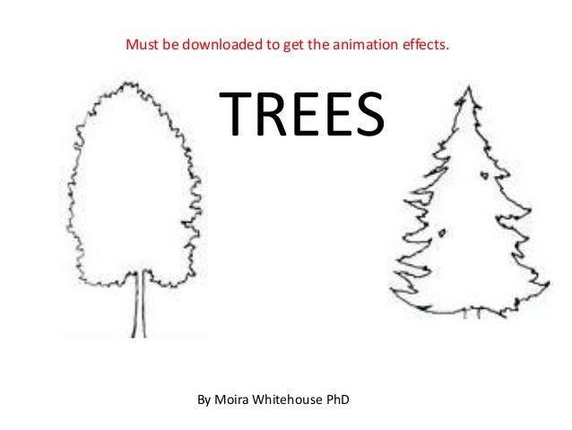 Trees, deciduous and coniferous (teach)