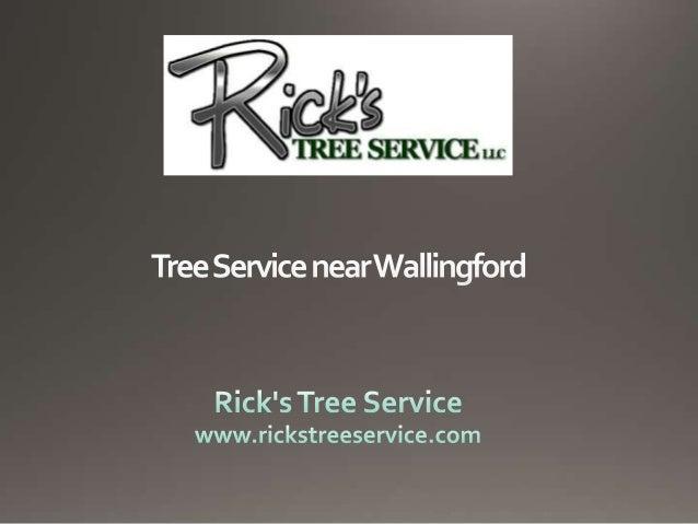 Tree Service near Wallingford