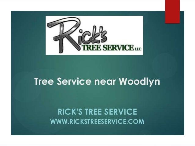 Tree Service near Woodlyn