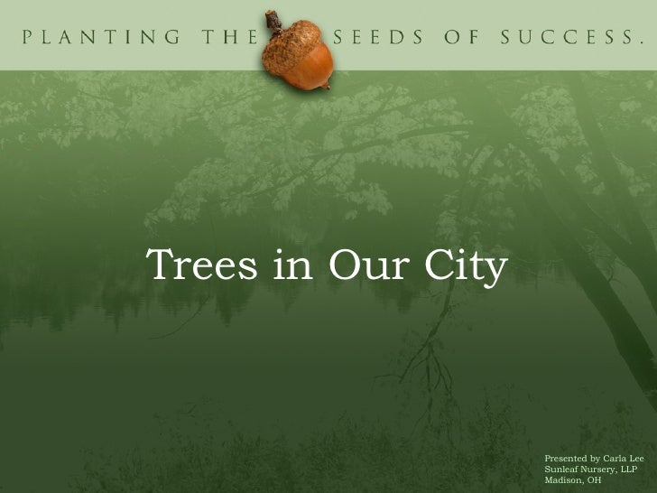 <ul><li>Trees in Our City </li></ul>Presented by Carla Lee Sunleaf Nursery, LLP Madison, OH