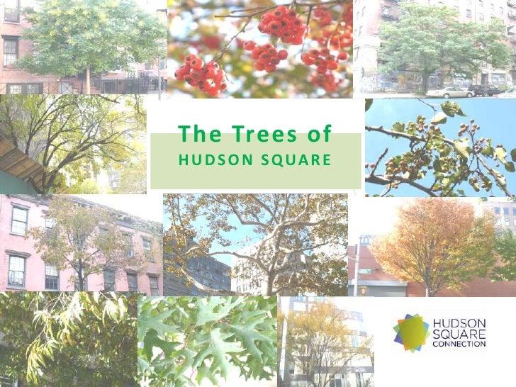 Trees off Hudson Square