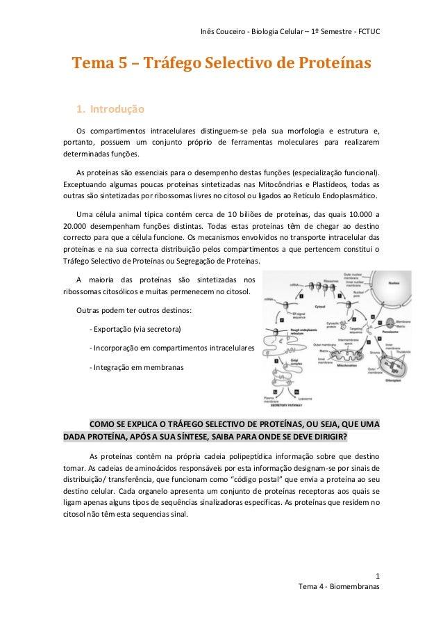 Inês Couceiro - Biologia Celular – 1º Semestre - FCTUC  Tema 5 – Tráfego Selectivo de Proteínas    1. Introdução    Os com...