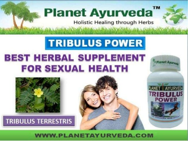 WHAT IS TRIBULUS TERRESTRIS  Tribulus terrestris is a flowering plant from the family zygophyllaceae and is native to war...