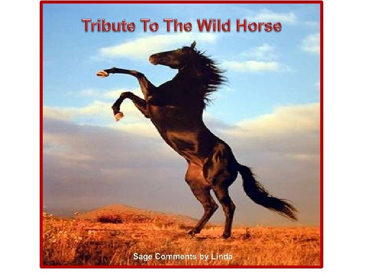 Tribute To The Wild Horse