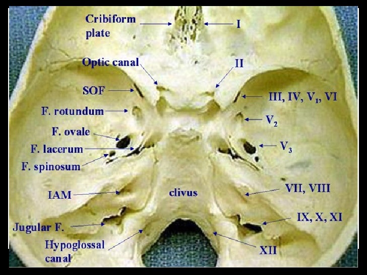 3 Anatomy Base Of Skull And Foramina Mrcs Making Revision