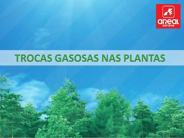Durante a fotossíntese, as plantas consomem dióxido de carbono e libertam oxigénio. Durante a fotossíntese, as plantas con...