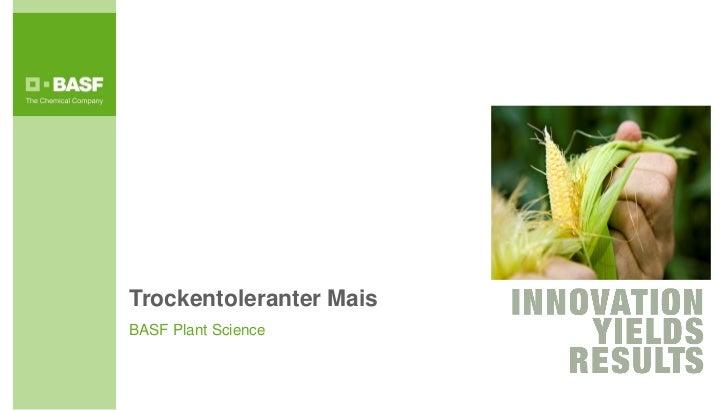 Trockentoleranter MaisBASF Plant Science