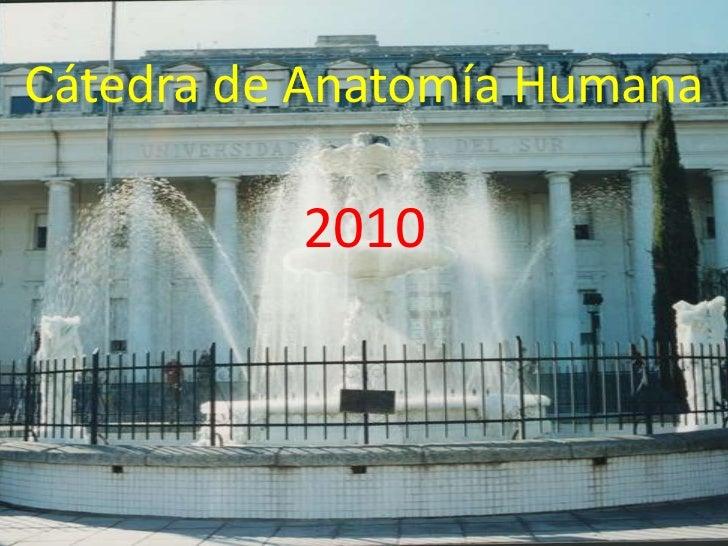 Cátedra de Anatomía Humana2010<br />