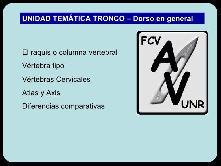 El raquis o columna vertebral Vértebra tipo Vértebras Cervicales Atlas y Axis Diferencias comparativas UNIDAD TEMÁTICA TRO...