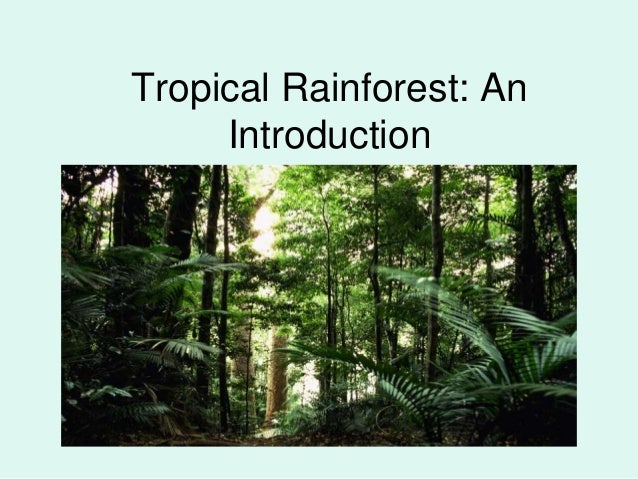 Tropical Rainforest: An     Introduction