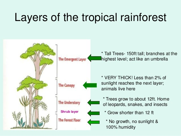 a short description of the amazon tropical rain forest Tropical rainforests present challenging conditions to the animals that live there   watch short & fun videos  from the amazon rainforest in south america to  the lush rainforests of australia and southeast asia to  it is interesting to note  that these frogs actually get their poisonous skin from sequestering chemicals  from.