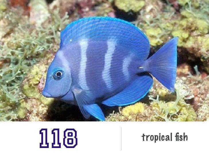 118   tropical fish