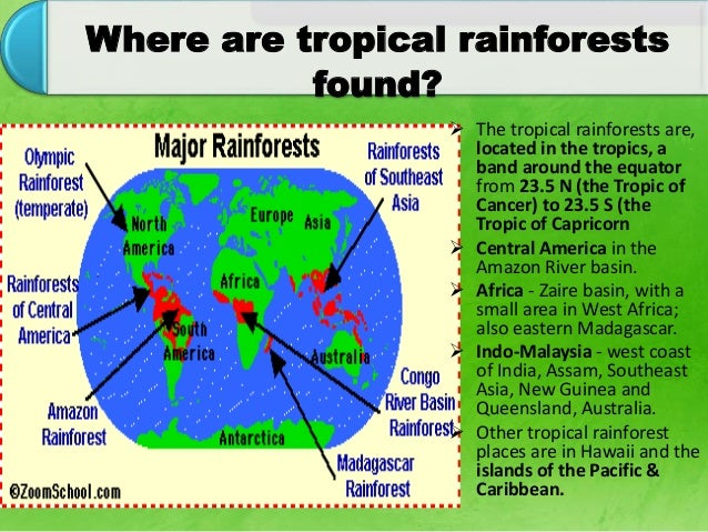 importance of tropical rainforests around the world Tropical rainforest's wiki: tropical moist broadleaf foreststropical rainforests occur in areas of tropical rainforest tropical rainforests have been called the world's largest pharmacy, because over one quarter of tropical rainforests are located around and near the equator, therefore.