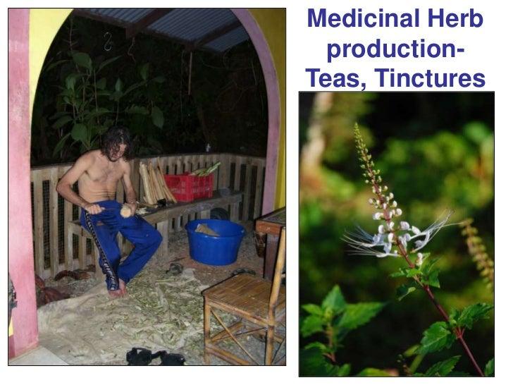Medicinal Herb production- Teas, Tinctures<br />