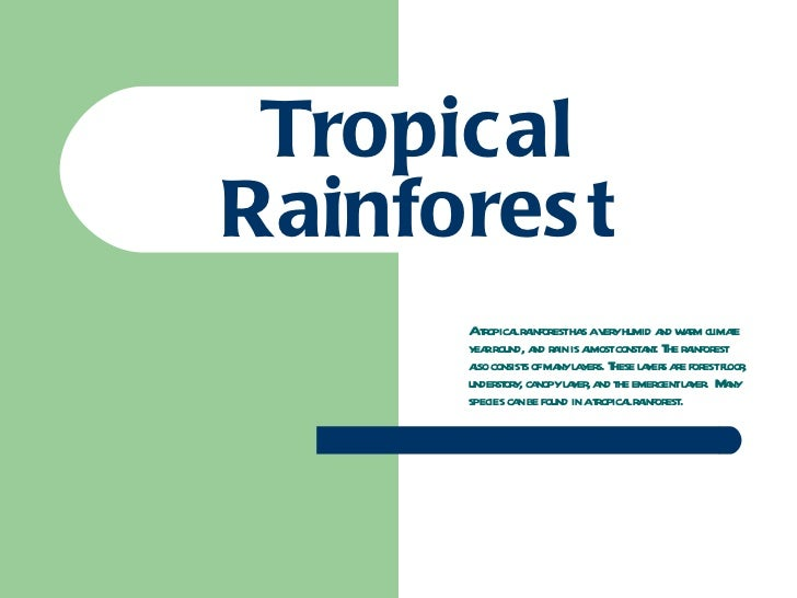 Tropical Rainforest A tropical rainforest has a very humid and warm climate year round, and rain is almost constant. The r...