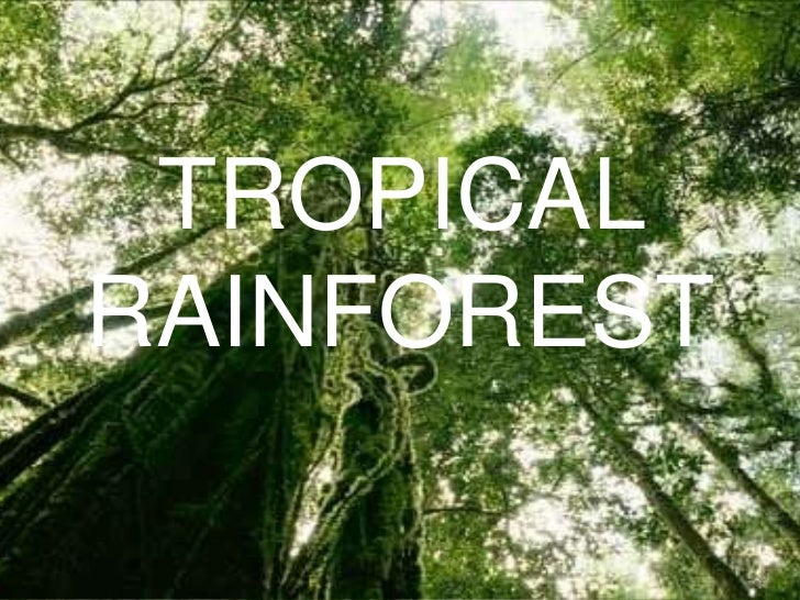 TROPICALRAINFOREST