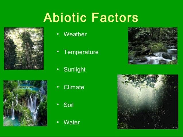 Tropical rainforest ecosystem biotic and abiotic factors biome project