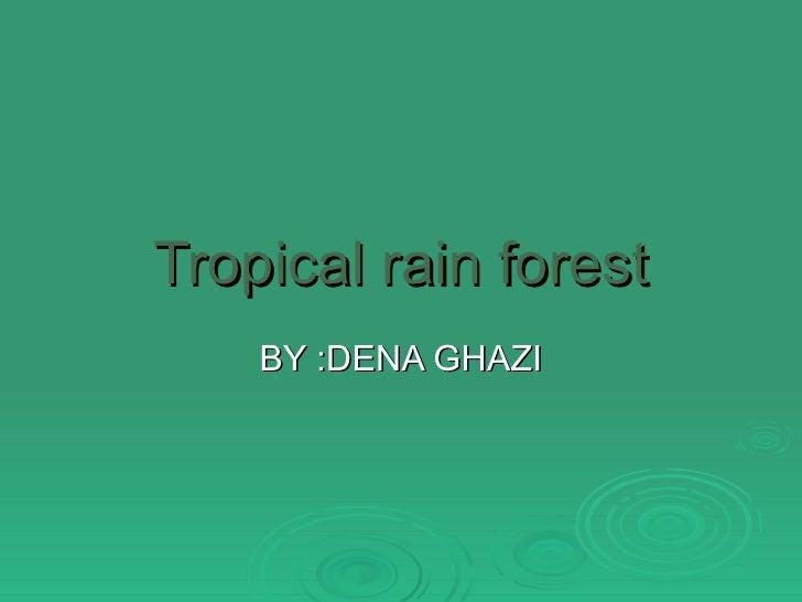 Tropical rain forest BY :DENA GHAZI