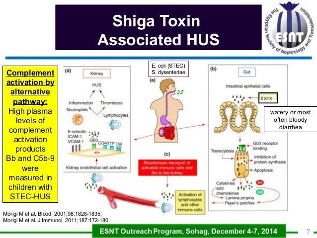 Allium sativum: chemical constituents, medicinal uses and health benefits