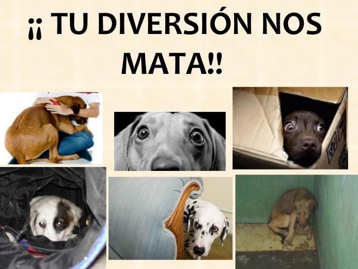 ¡¡ TU DIVERSIÓN NOS MATA!!