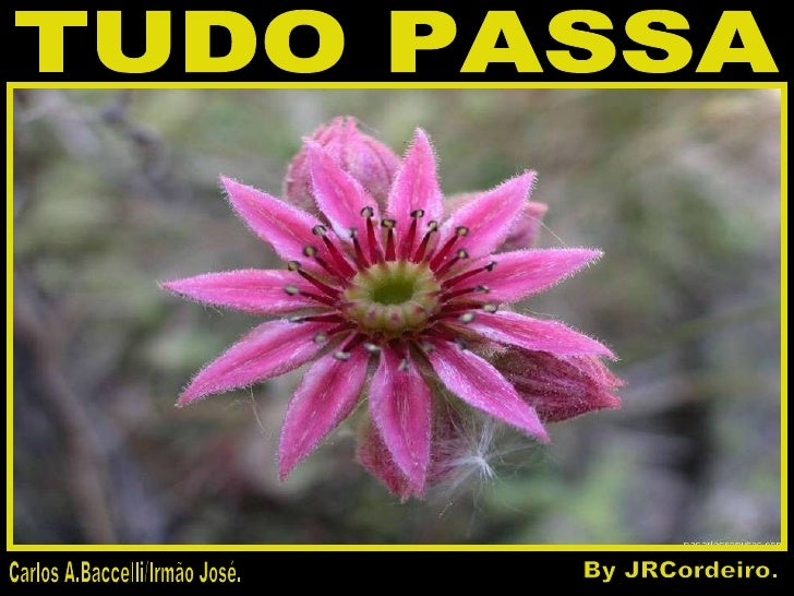 TUDO PASSA Carlos A.Baccelli/Irmão José. By JRCordeiro.