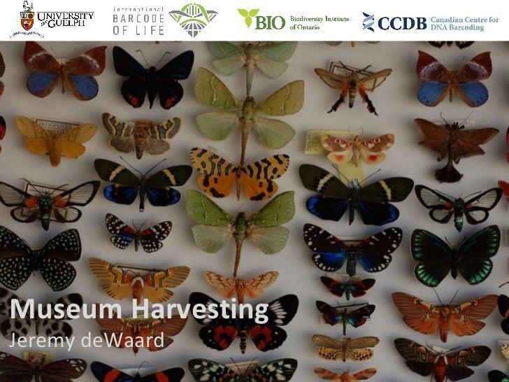 Museum Harvesting Jeremy deWaard