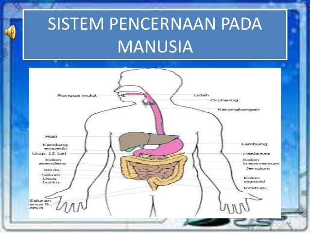 SISTEM PENCERNAAN PADA MANUSIA  1