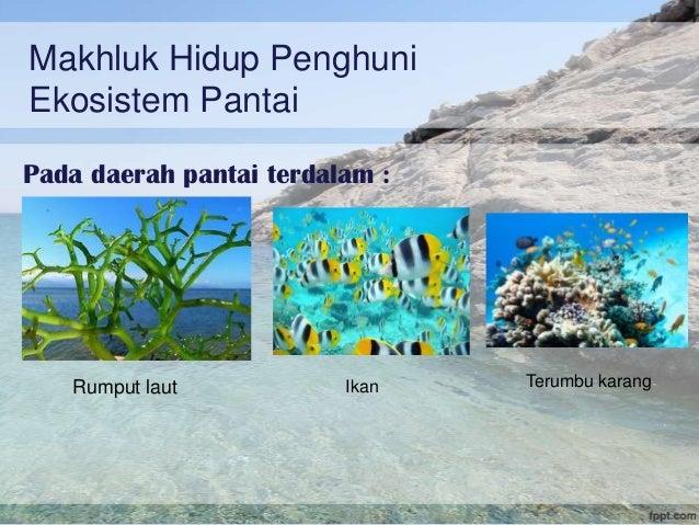 Ekosistem Pantai & Terumbu karang