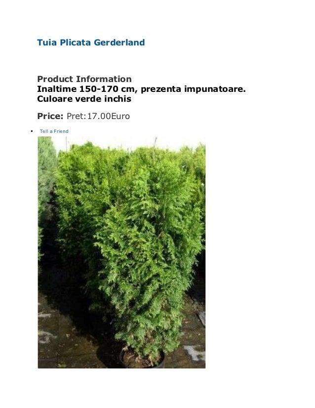 Tuia Plicata Gerderland    Product Information    Inaltime 150-170 cm, prezenta impunatoare.    Culoare verde inchis    Pr...