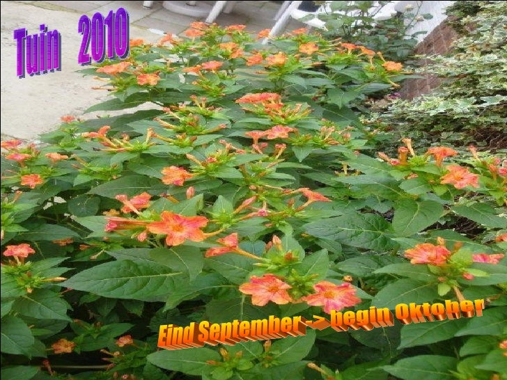 Tuin  2010 Eind September -> begin Oktober