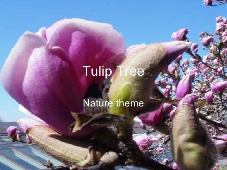 Tulip Tree Nature theme