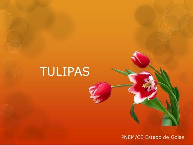 TULIPAS PNEM/CE Estado de Goias